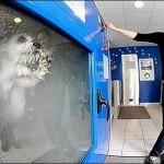 Dog-o-matic, automatic dog washing machine